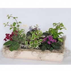 Jardinera de violetas