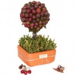 Árbol frutal navideño