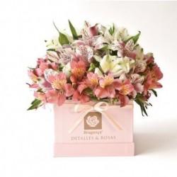 Valentín Astromelias 2 - Grande